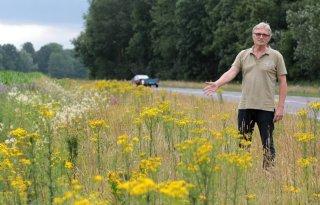 Drentse boeren bezorgd over jakobskruiskruid
