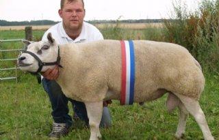 Goede kwaliteit schapenfokdag Blijham