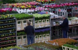 FloraHolland+en+MPS%3A+naar+productgaranties