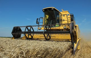 Soepele tarwe-oogst en goede opbrengsten