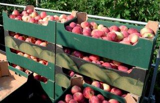 Rusland+stimuleert+eigen+fruitproductie