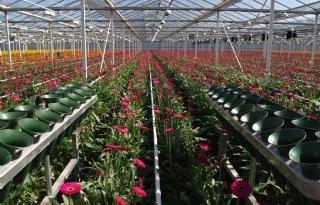 'Stevige plus export bloemen en planten'