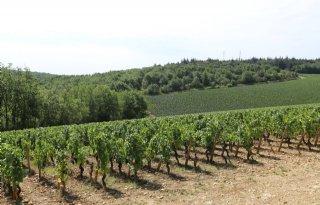 Kwart+meer+wijn+in+Frankrijk