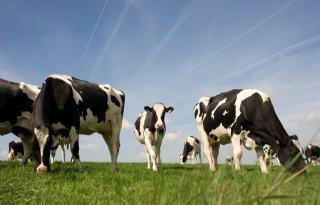Boeren+in+discussie+over+dieraantallen