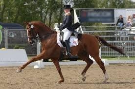 Monitor: Paardensport verandert
