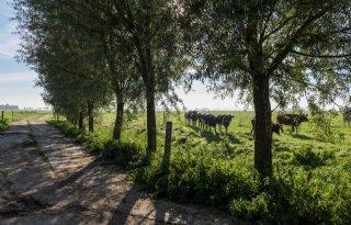 Boeren+Middag%2DHumsterland+optimistisch