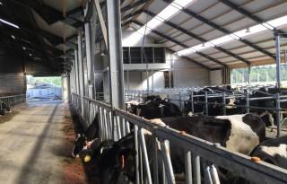 Luchtwasser rukt op in melkveehouderij