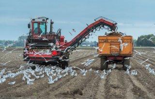 Forse+meeropbrengst+nodig+voor+ruimere+aardappelrotatie