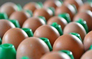 Marktprijzen Eieren