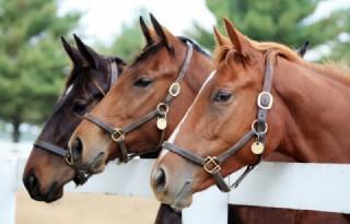 Marktprijzen Paarden en Ponys