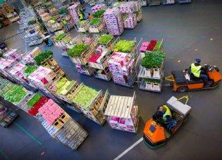 Global GAP vergroot aantal keuzes sierteeltbedrijven