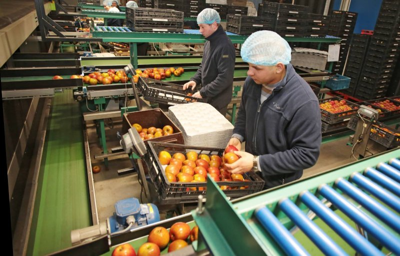 Telers en verwerkers koelen op jaarbasis 600 miljoen kilo fruit op Nederlandse bodem.