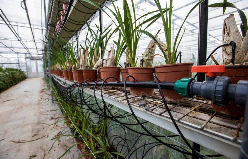 Het waterrecirculatiesysteem bij Star Orchids in 's-Gravenzande.