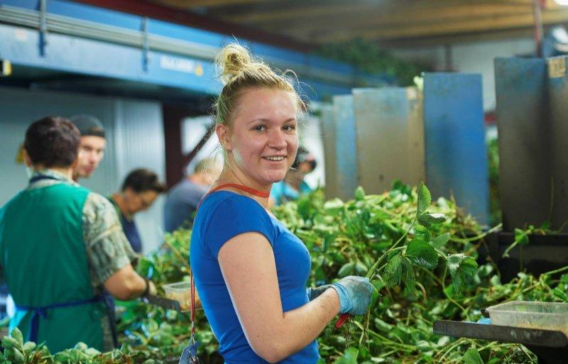Werkgevers die tijdelijke medewerkers zoeken, kunnen ook zelf vacatures plaatsen op Seasonalwork.NL