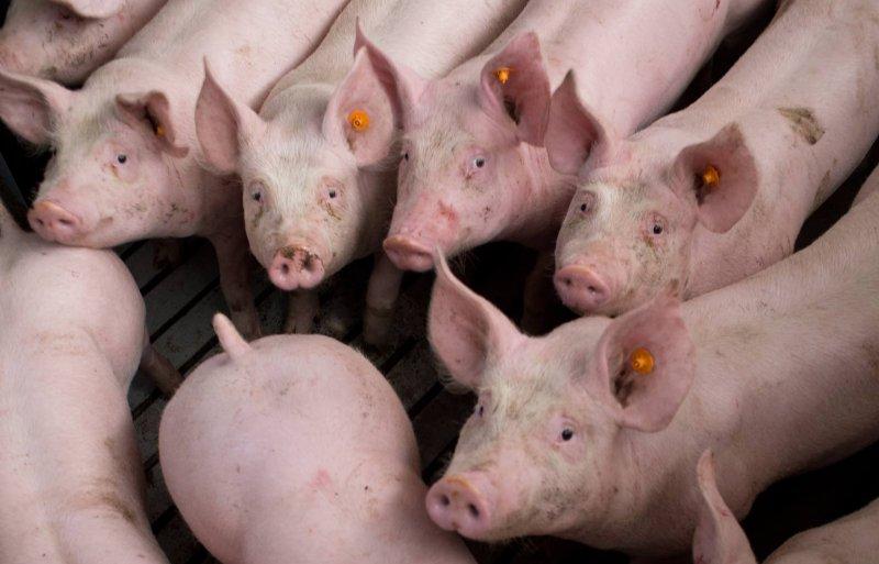 De verduurzaming van de intensieve veehouderij is speerpunt van de landelijke en provinciale politiek.