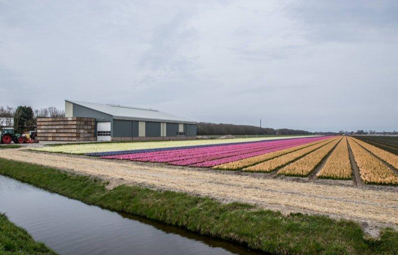 Bloembollenkwekerij M.C. Zonneveld is een van de dertien leden van NLG Holland.