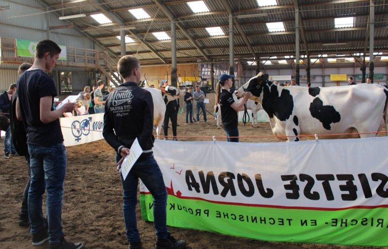 Honderd leerlingen aan het Nordwin College in Leeuwarden deden vrijdag mee aan een veebeoordelingswedstrijd in Oentsjerk.