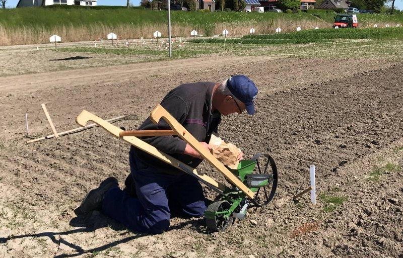 Piet Hoekstra is iedere dag op het gewassenveld aanwezig. Foto: Mijno van Dijk