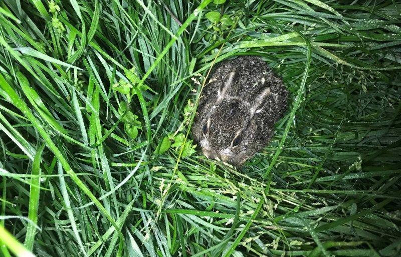 Soms denk je dat het een nest is en dan is het een jonge haas.