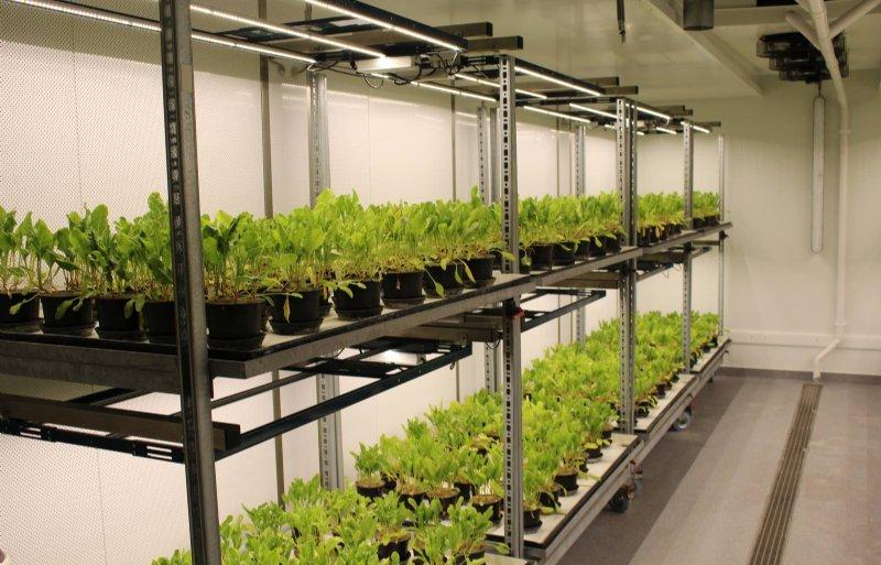 Eén van de klimaatkamers die gebruikt wordt voor onderzoek aan suikerbieten en cichorei.