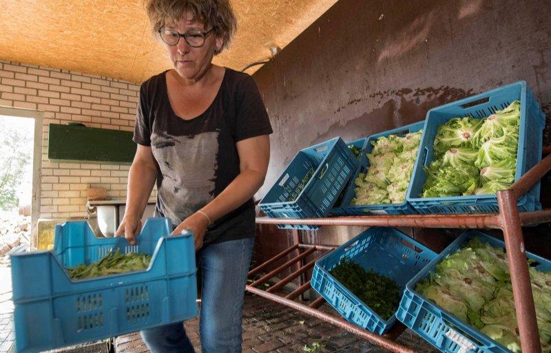 Voedselcoöperaties hebben volgens projectleider Estella Franssen een aanzwengelende werking.