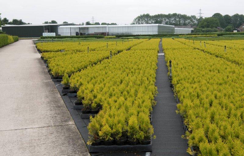 60 procent van het assortiment bestaat uit coniferen.