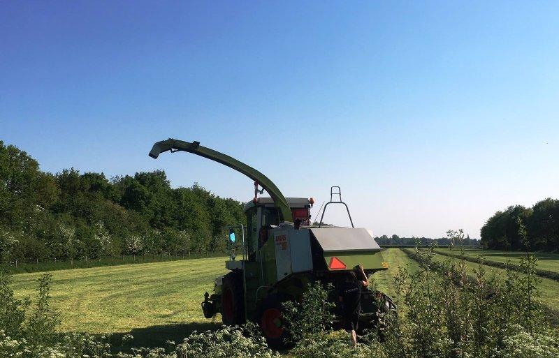 Het oogsten van gras op een natuurinclusief boerenbedrijf in de provincie Utrecht.
