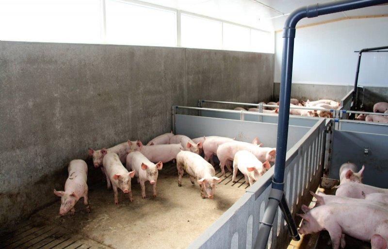 Govert Frederix: 'Voldoende daglicht is ook voor de varkenshouder zelf prettig.'