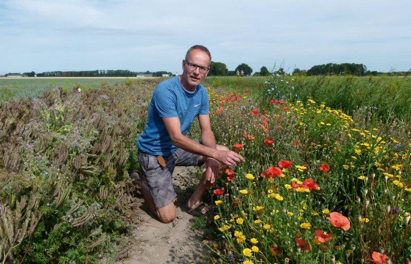 Akkerbouwer Wim Stegeman uit Lelystad experimenteert met akkerranden. Links een rand met soorten die gunstig zijn voor vijanden van trips.