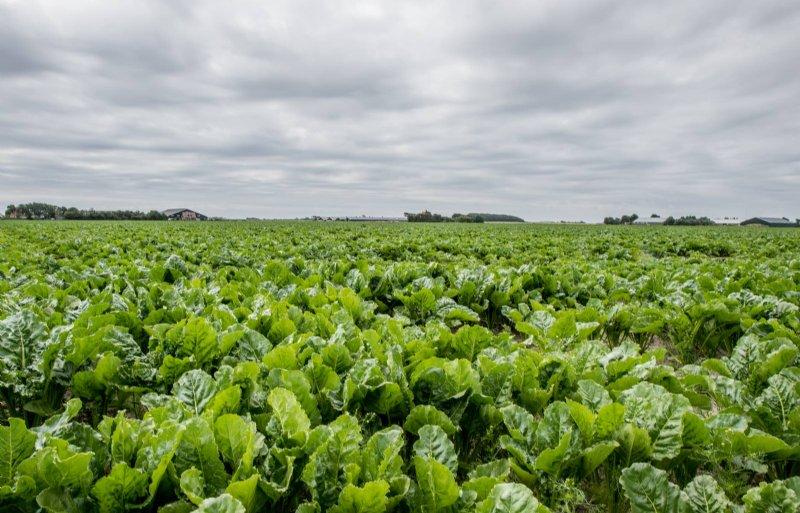 Een akkerbouwperceel met links op de achtergrond het veehouderijbedrijf van Van der Star.
