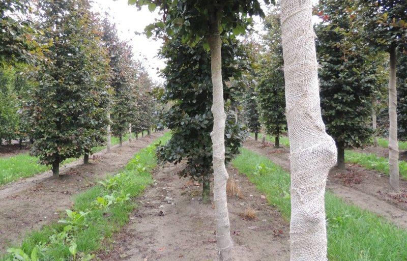 De bomen hebben een sterk wortelstelsel.