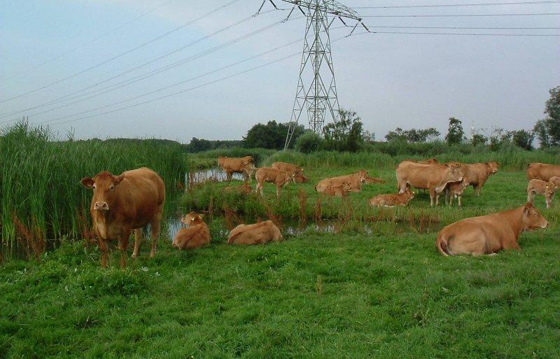 Koningshoeve-Ettingen beheert 450 hectare natuur.
