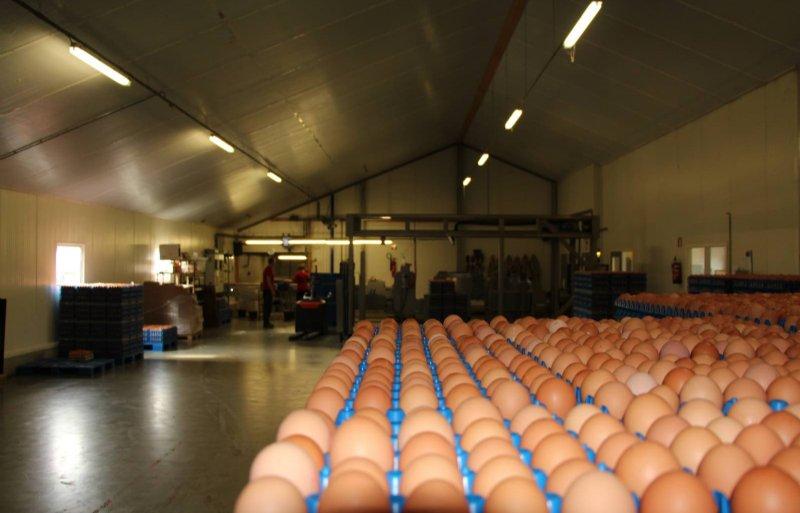 Verse eieren worden dagelijks bij klanten afgeleverd.