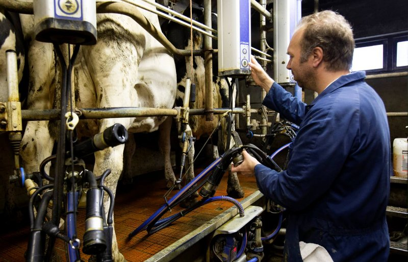 Er gaan nauwelijks koeien weg vanwege mastitis.
