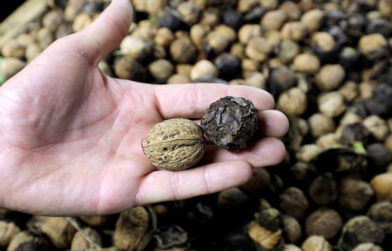 In de notengaard zijn walnoten, hazelnoten en tamme kastanjes te vinden.