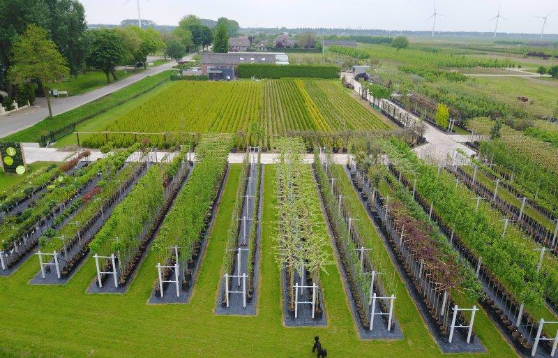 De boomkwekerij van 10 hectare in Lienden.