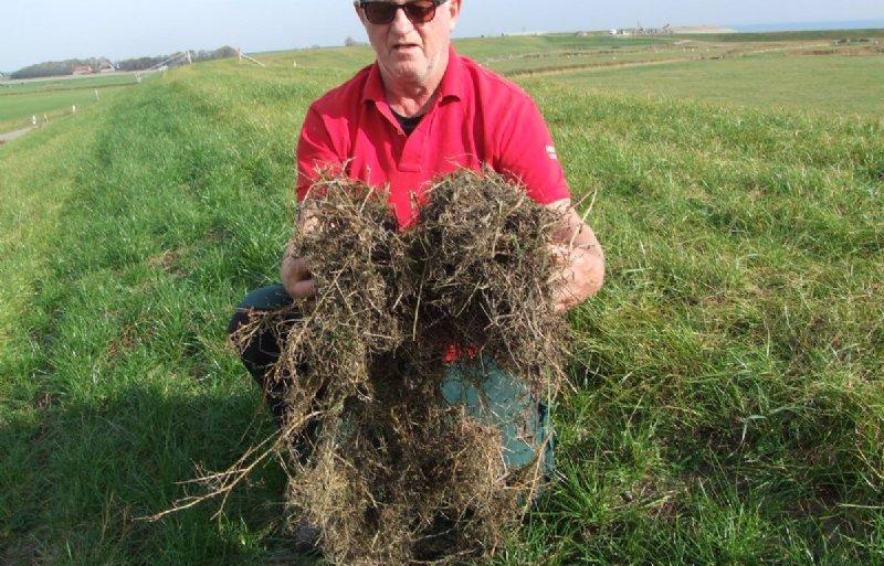 Henk van der Star, schapenhouder op Texel