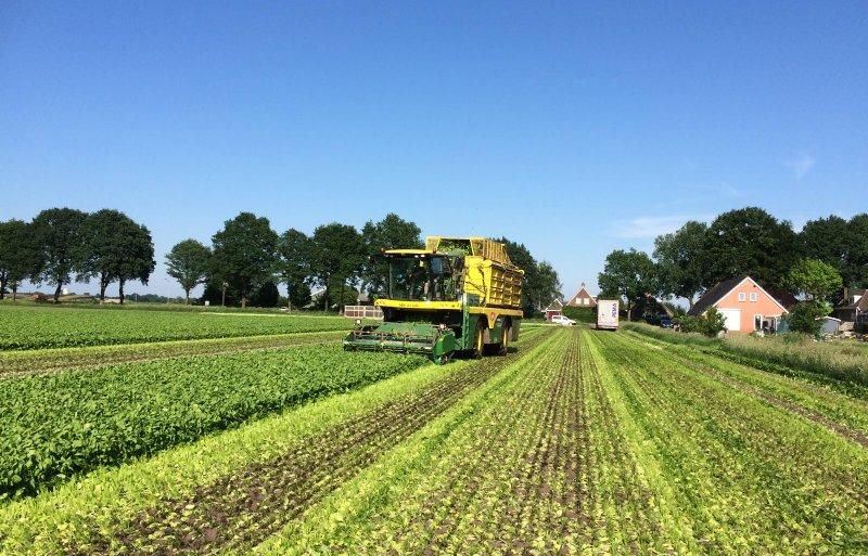 Iglo neemt het oogsten van de spinazie voor zijn rekening.