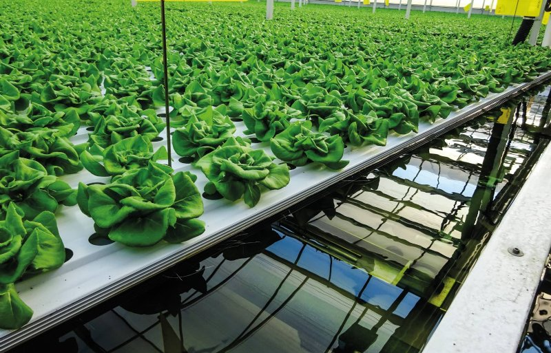 Mucci Farm was het eerste bedrijf in Noord-Amerika met het kassenteeltsysteem op water.