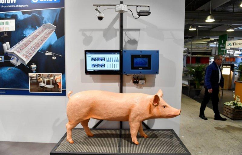 Monitoring van de groei van vleesvarkens met camerabeelden.