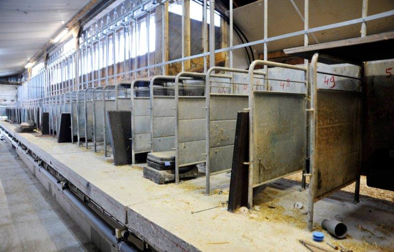 de 50-stands melkstal is bijna klaar voor de schapen
