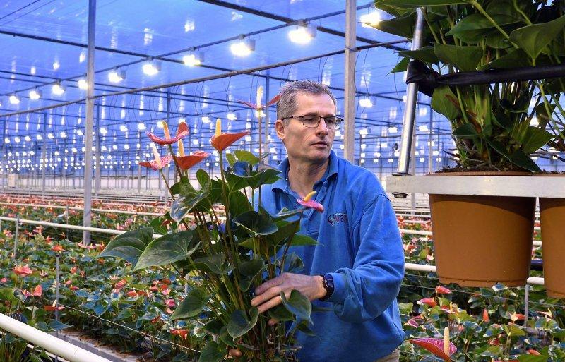 Het rapen van planten uit de kas door medewerker.