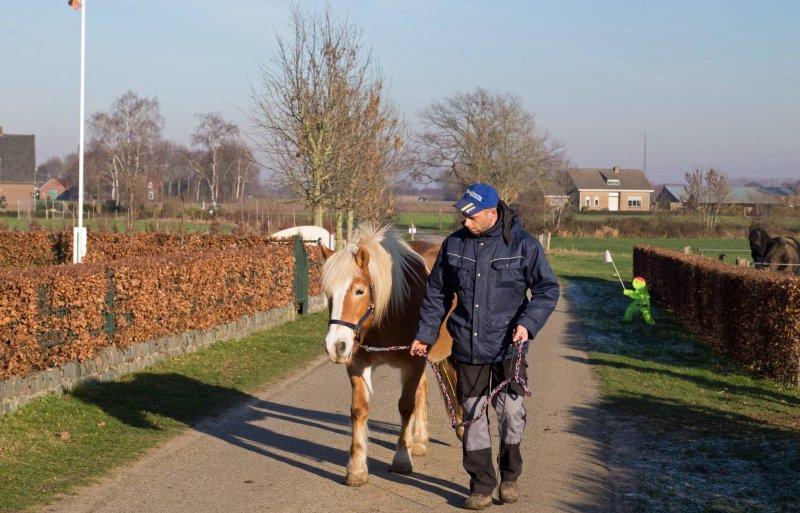 Cliënt Jan helpt met het binnenhalen van de dieren.