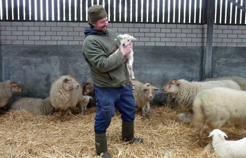 Bart van Ekkendonk vindt het Kempisch heideschaap een fijn ras om mee te werken.