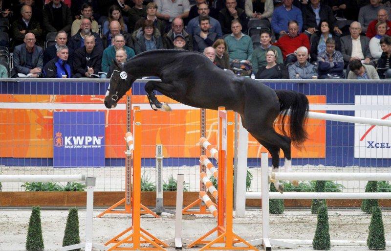 Ook qua springen gooit Nederland hoge ogen.