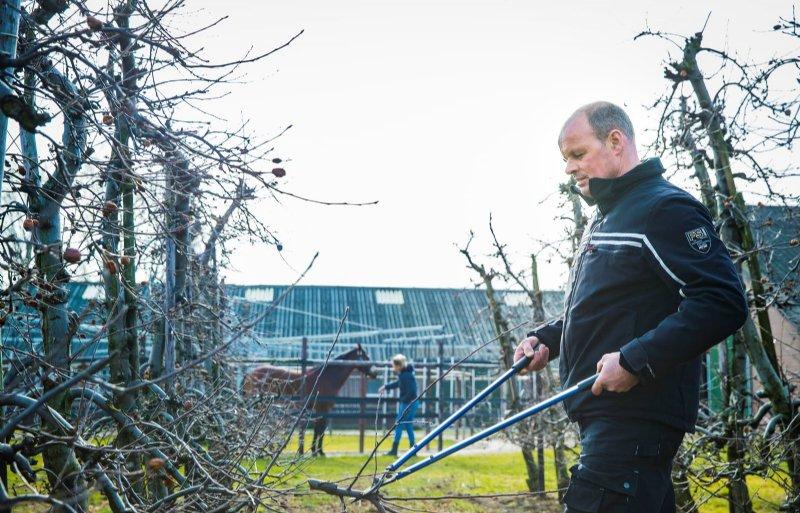 Frank Hoeymakers snoeit de fruitbomen. Hij teelt Conference-peren en Elstar-appels.