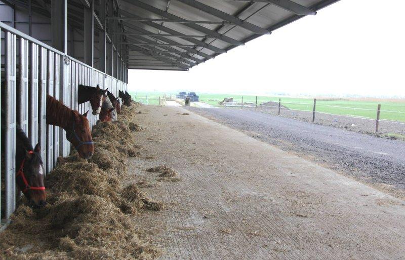 Veel paarden worden in een loopstal gehuisvest.