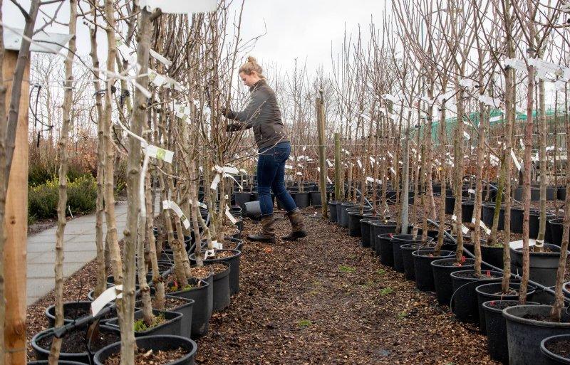 In het voorjaar vindt het oppotten in de kwekerij plaats.