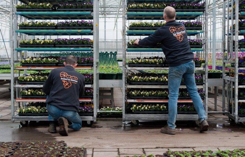Het verkoopseizoen begint in februari met viooltjes.