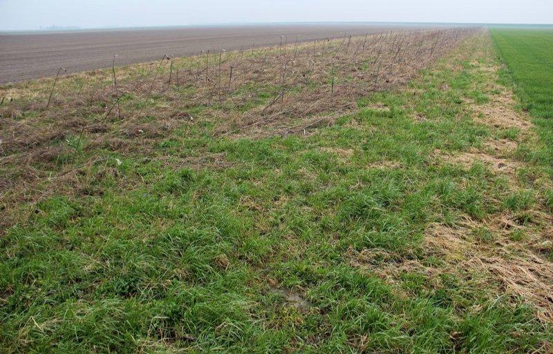 Bloemstroken als agrarisch natuurbeheer.